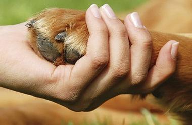 benefits-of-dog-massage